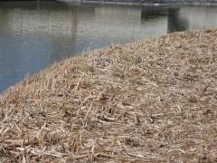 2012-04-01 Lac des oiseaux  (Small).JPG