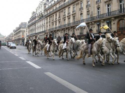 2011-011-27 Chevaux Opéra DSCN4945 (Small).JPG