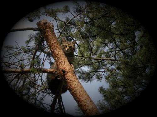 2011-06-08 Minette arbre 2 (Small).JPG