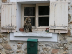 Chat St Sulpice (Small).JPG