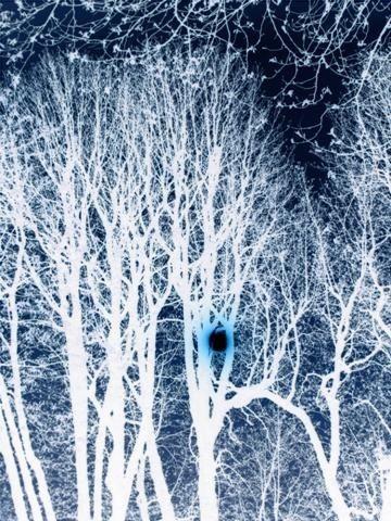 armillaire,buttes-chaumont,arbre tombé,arbre malade,champignon