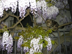 Glycine + Chat (Small).JPG