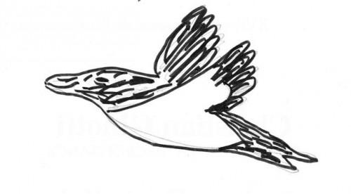 2012-10-29 dessin Pingouin (Small).jpg
